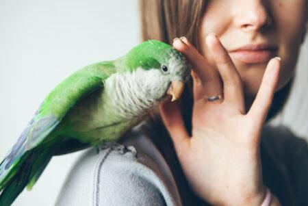 fijnstof bij vogels